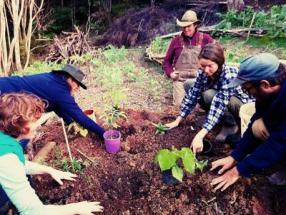 Food Forest In Syntropy Course